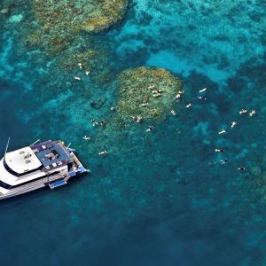 Great Barrier Reef Day Tour, Reef Experience