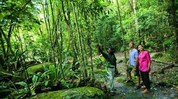 Cairns half day rainforest Tour