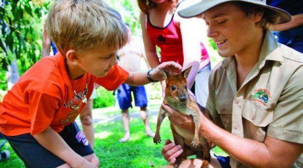Cuteness overload - pat wallabies and kangaroos.